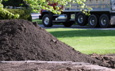 Topsoil: 8 Interesting Facts