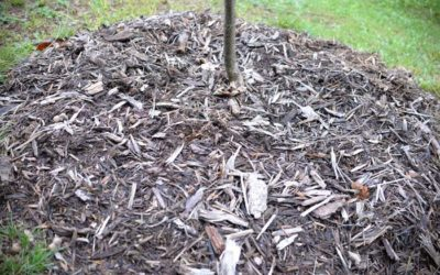 What Should I Do With Old Mulch?