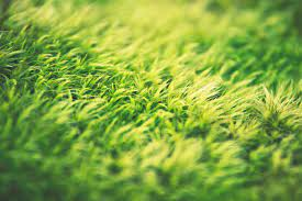 5 Benefits of Top-Dressing Your Lawn
